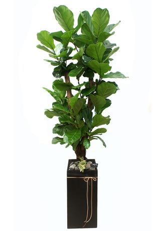 떡갈나무 고급 개업화분배달