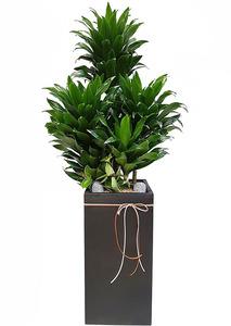 콤펙타-실내인테리어식물