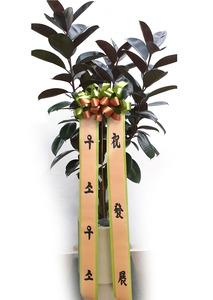 흑고무나무 가지원형