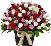 사랑고백 100송이장미 02