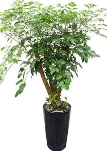 해피트리4가지 실내인테리어식물