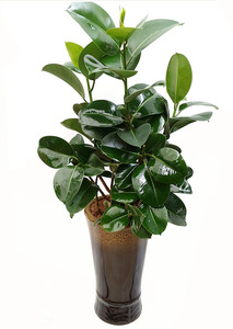 실내공기정화식물 개업선물