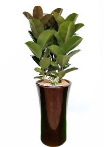 실내공기정화식물 화분배달
